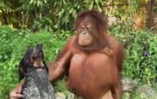 amizade de animais - amizade verdadeira