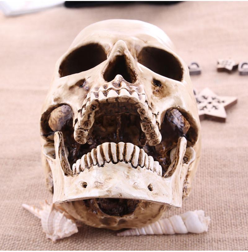 cranio em resina - compra