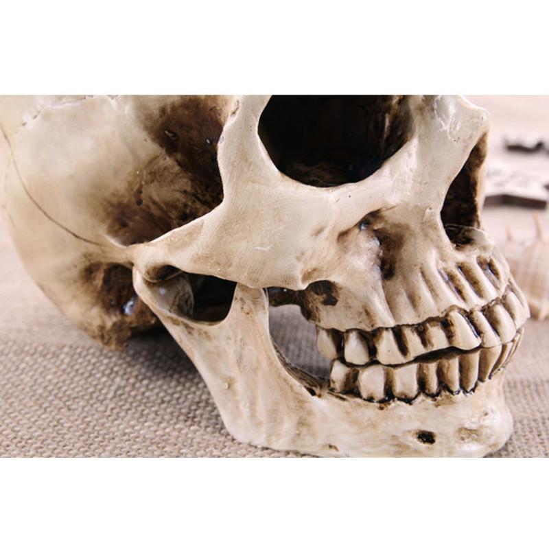 cranio perfeito em resina
