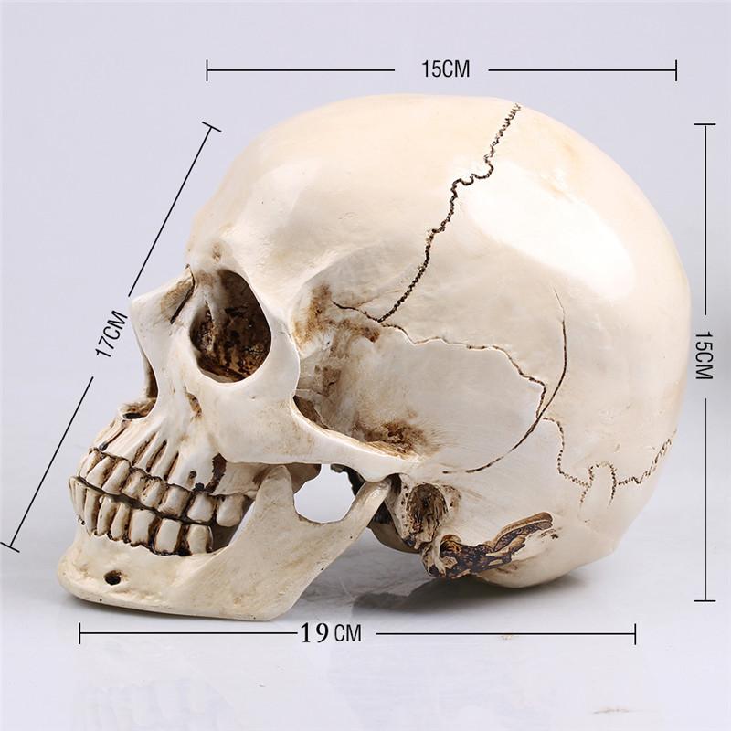comprar cranio realistico em resina