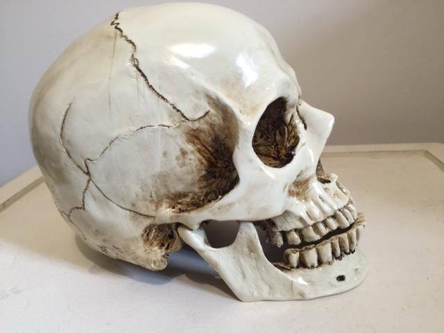 replica de cranio em resina