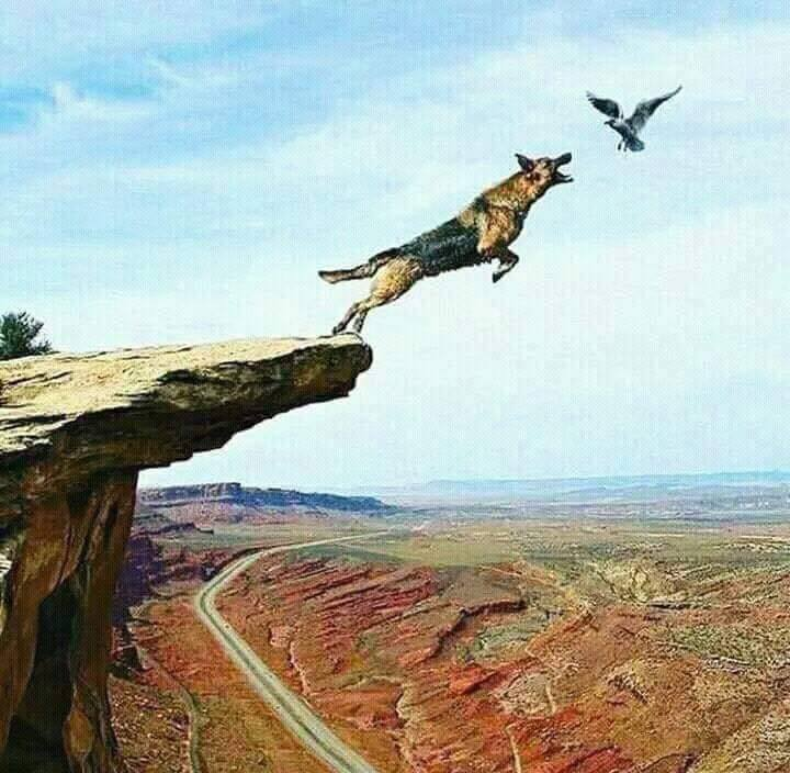 cachorro-tentando-morder-passaro