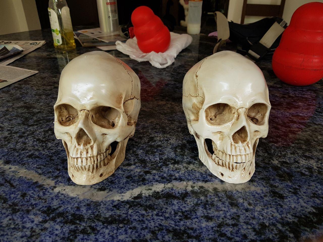 caveira em resina - cranio realista (1)