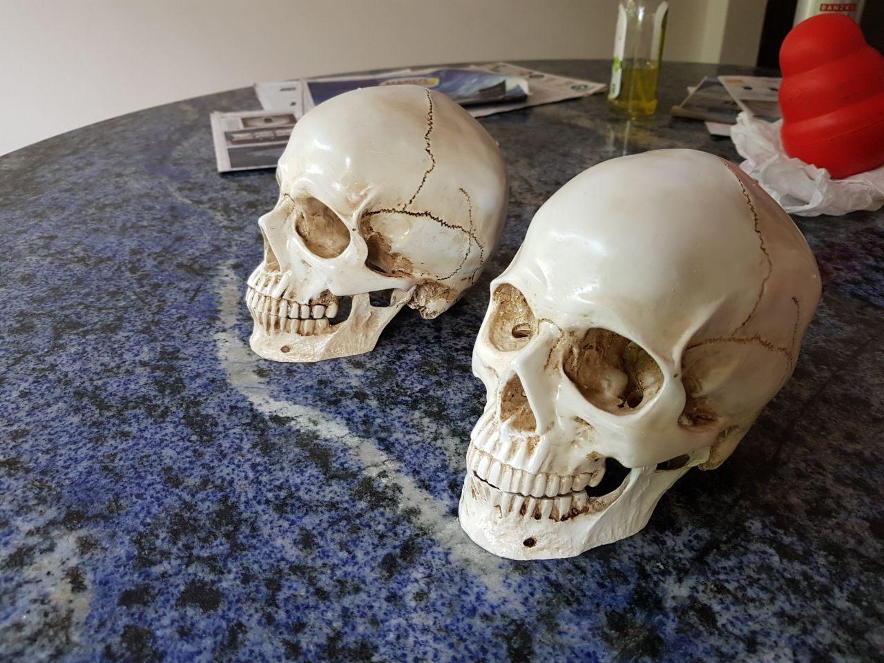 caveira em resina - cranio realista (2)