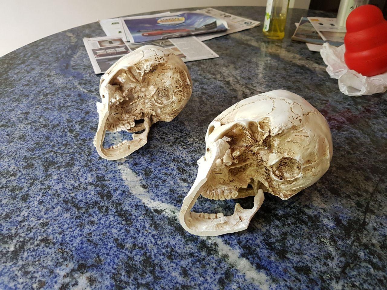 caveira em resina - cranio realista (3)