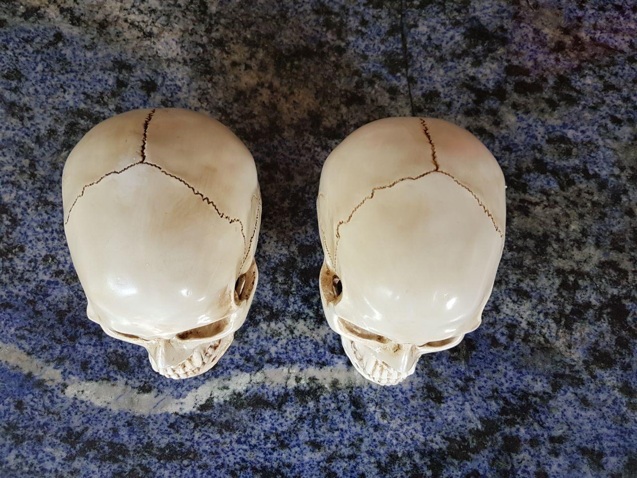 caveira em resina - cranio realista (4)