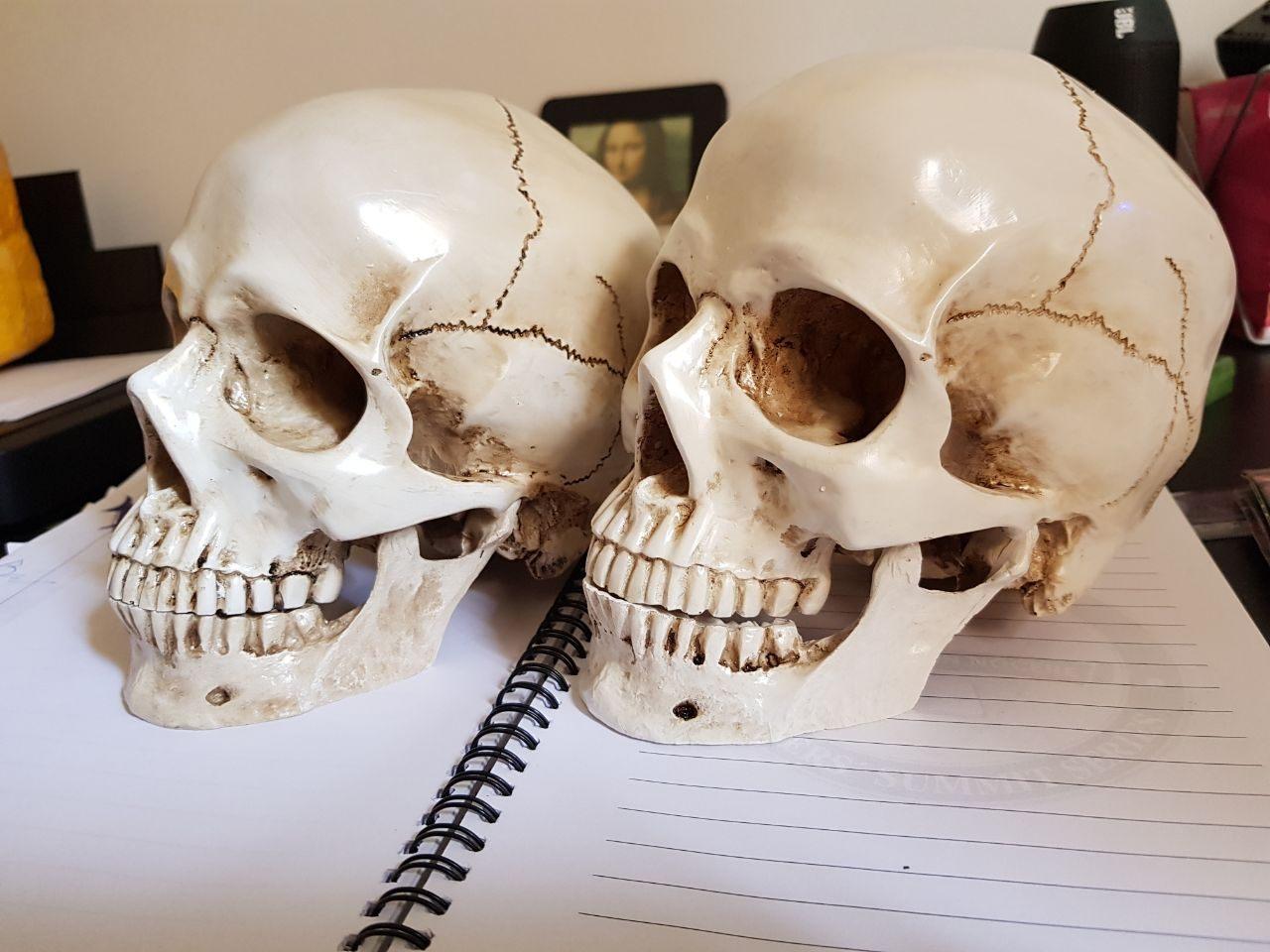 caveira em resina - cranio realista (5)