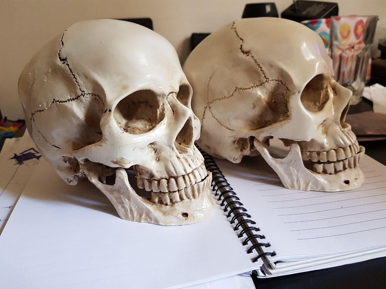 caveira em resina - cranio realista (6)