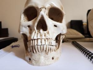 caveira em resina - cranio realista (7)