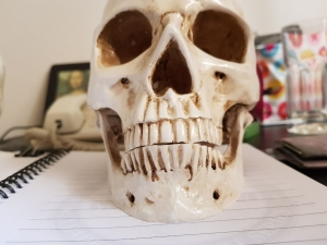 caveira em resina - cranio realista (8)